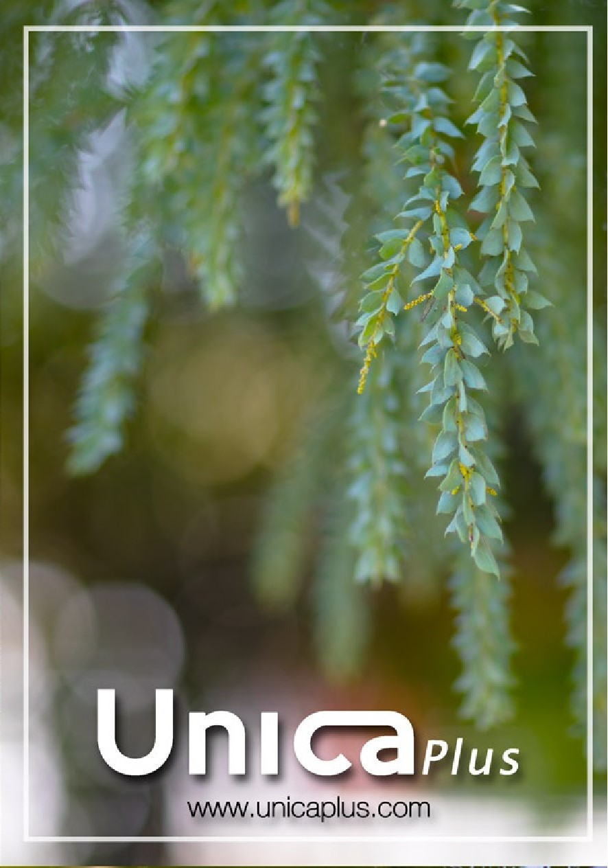 UNICA Otono Invierno 2021-022B